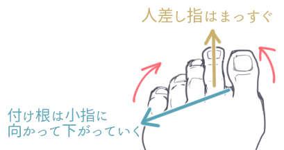 足の指の向き